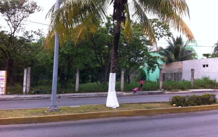 Foto de terreno comercial en renta en  , cozumel centro, cozumel, quintana roo, 1137195 No. 05