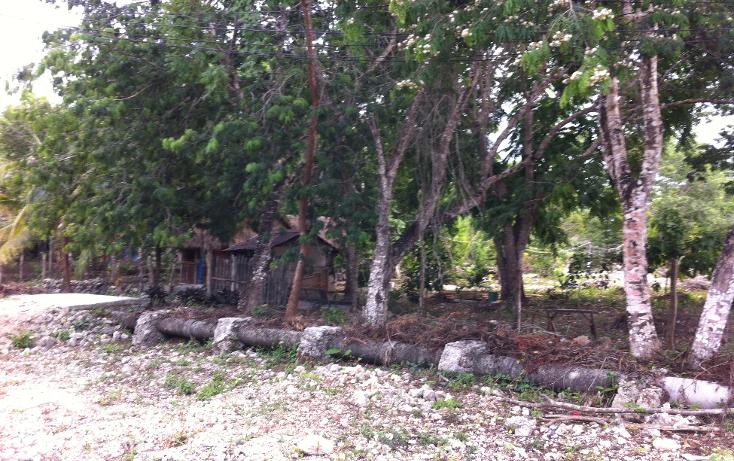 Foto de terreno habitacional en venta en  , cozumel centro, cozumel, quintana roo, 1301765 No. 04