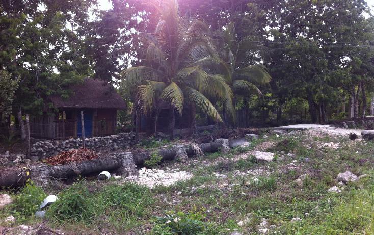 Foto de terreno habitacional en venta en  , cozumel centro, cozumel, quintana roo, 1301765 No. 09