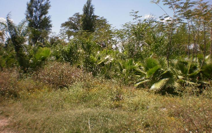 Foto de terreno comercial en venta en  , cuautlixco, cuautla, morelos, 1080363 No. 04