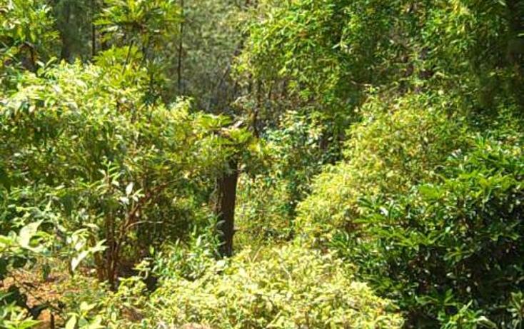 Foto de terreno habitacional en venta en  , del bosque, cuernavaca, morelos, 399195 No. 07