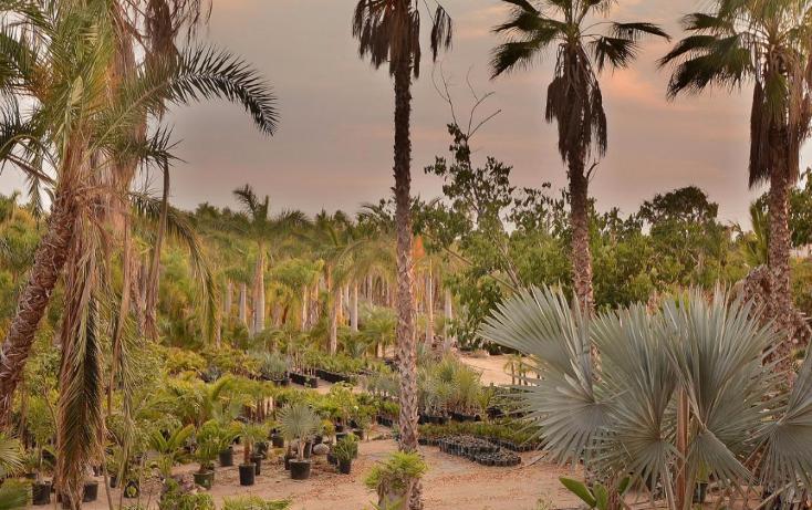 Foto de terreno habitacional en venta en  , del sol, la paz, baja california sur, 1746782 No. 03