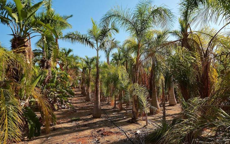 Foto de terreno habitacional en venta en  , del sol, la paz, baja california sur, 1746782 No. 05