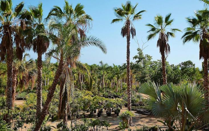 Foto de terreno habitacional en venta en  , del sol, la paz, baja california sur, 1746782 No. 07