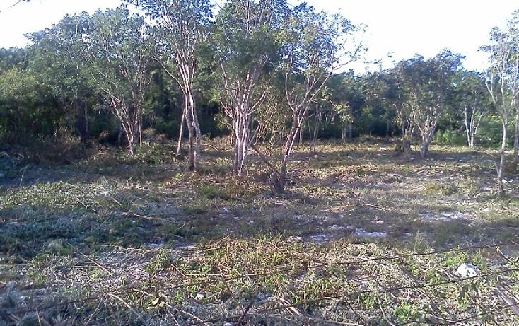 Foto de terreno habitacional en venta en  , doctores ii, benito juárez, quintana roo, 1126679 No. 05