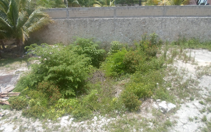 Foto de terreno habitacional en venta en  , doctores ii, benito juárez, quintana roo, 1290721 No. 03