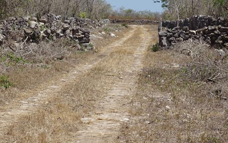 Foto de terreno habitacional en venta en  , dzidzantun, dzidzant?n, yucat?n, 1548510 No. 10