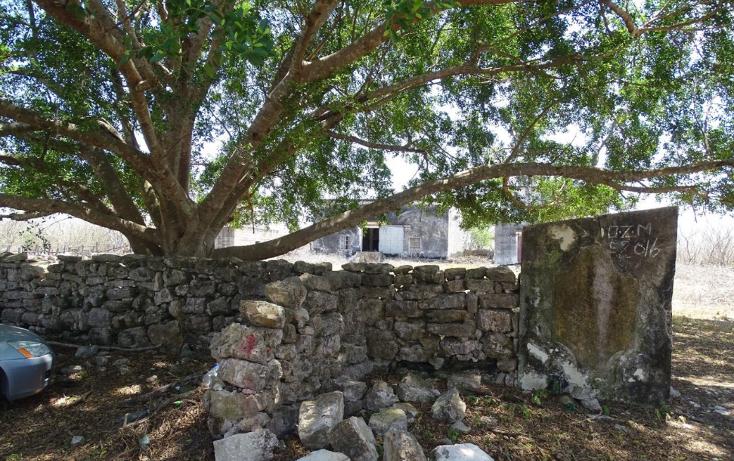 Foto de terreno habitacional en venta en  , dzidzantun, dzidzant?n, yucat?n, 1548510 No. 12