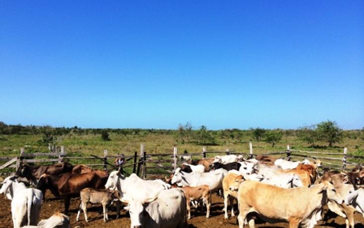 Foto de rancho en venta en  , dzilam de bravo, dzilam de bravo, yucatán, 1119895 No. 01