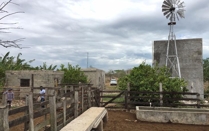 Foto de rancho en venta en  , dzilam de bravo, dzilam de bravo, yucatán, 1119895 No. 02