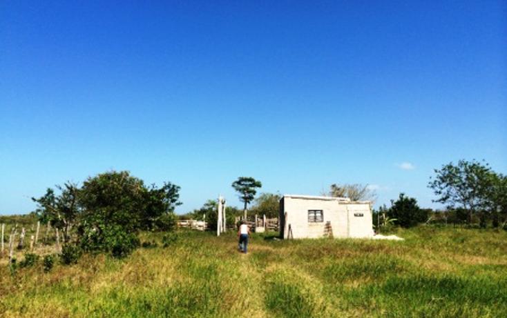 Foto de rancho en venta en  , dzilam de bravo, dzilam de bravo, yucatán, 1119895 No. 03
