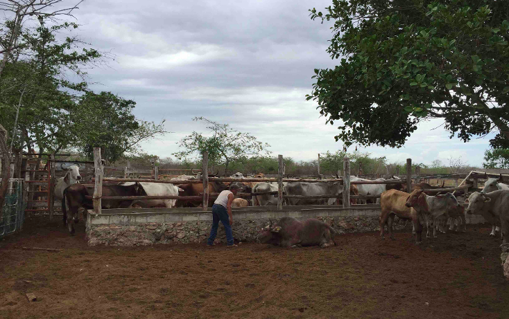 Foto de rancho en venta en  , dzilam de bravo, dzilam de bravo, yucatán, 1119895 No. 06