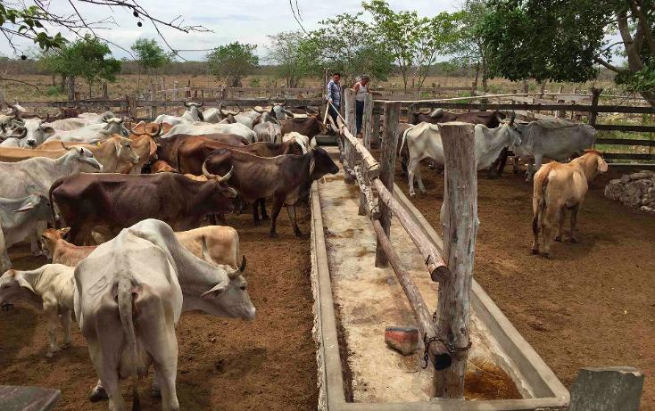 Foto de rancho en venta en  , dzilam de bravo, dzilam de bravo, yucatán, 1119895 No. 07