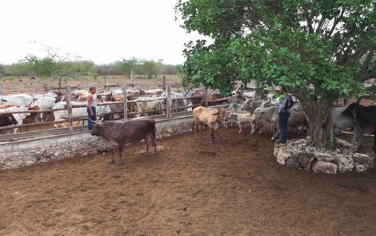 Foto de rancho en venta en  , dzilam de bravo, dzilam de bravo, yucatán, 1119895 No. 11