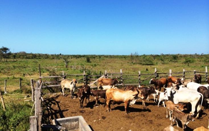Foto de rancho en venta en  , dzilam de bravo, dzilam de bravo, yucatán, 1119895 No. 14