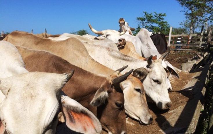 Foto de rancho en venta en  , dzilam de bravo, dzilam de bravo, yucatán, 1119895 No. 15