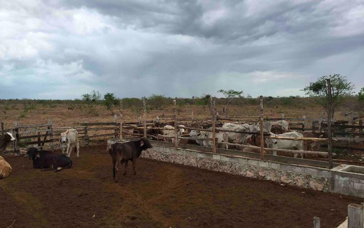 Foto de rancho en venta en  , dzilam de bravo, dzilam de bravo, yucatán, 1119895 No. 16
