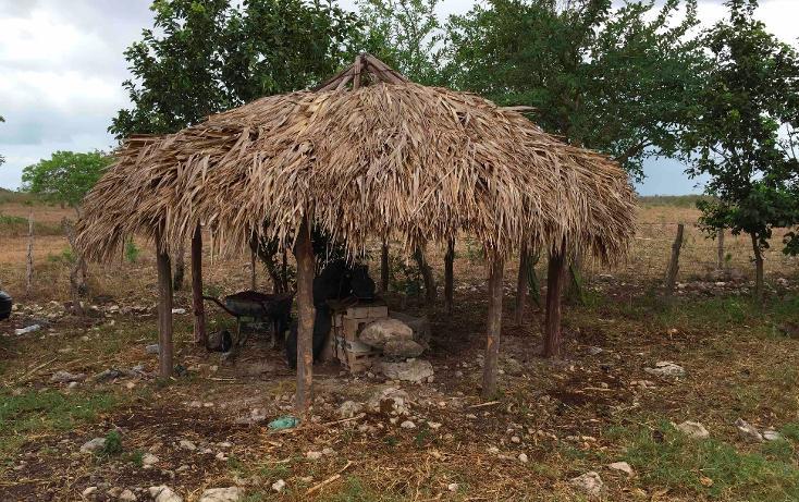 Foto de rancho en venta en  , dzilam de bravo, dzilam de bravo, yucatán, 1119895 No. 19