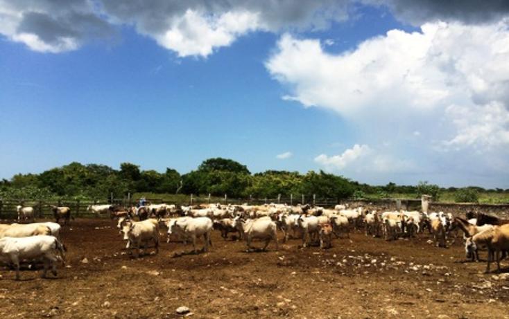 Foto de rancho en venta en  , dzilam de bravo, dzilam de bravo, yucatán, 1132185 No. 01