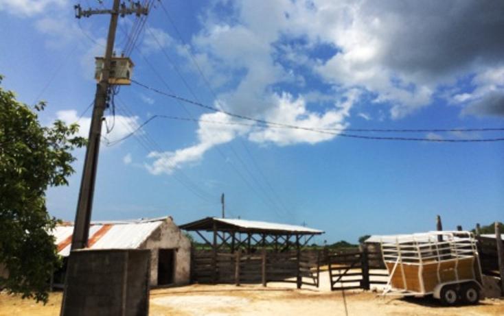 Foto de rancho en venta en  , dzilam de bravo, dzilam de bravo, yucatán, 1132185 No. 08