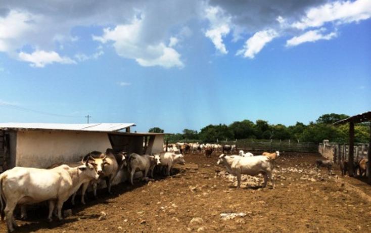 Foto de rancho en venta en  , dzilam de bravo, dzilam de bravo, yucatán, 1132185 No. 09
