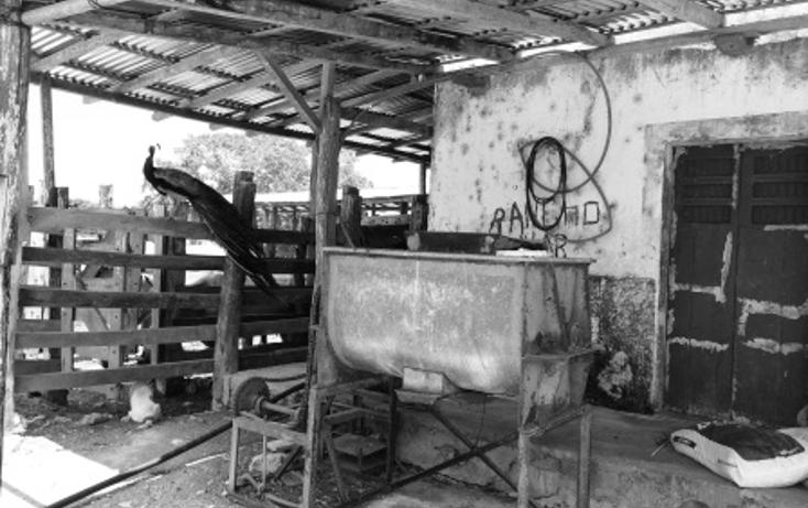Foto de rancho en venta en  , dzilam de bravo, dzilam de bravo, yucatán, 1132185 No. 13