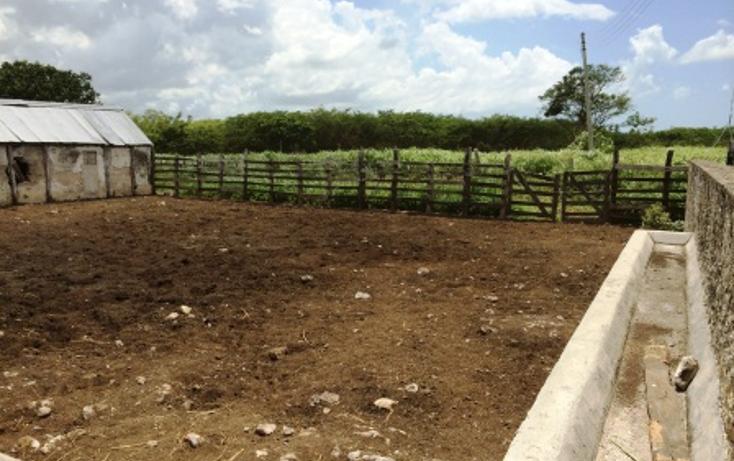 Foto de rancho en venta en  , dzilam de bravo, dzilam de bravo, yucatán, 1132185 No. 14