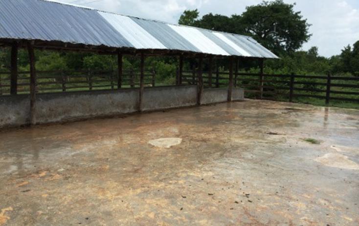 Foto de rancho en venta en  , dzilam de bravo, dzilam de bravo, yucatán, 1132185 No. 19