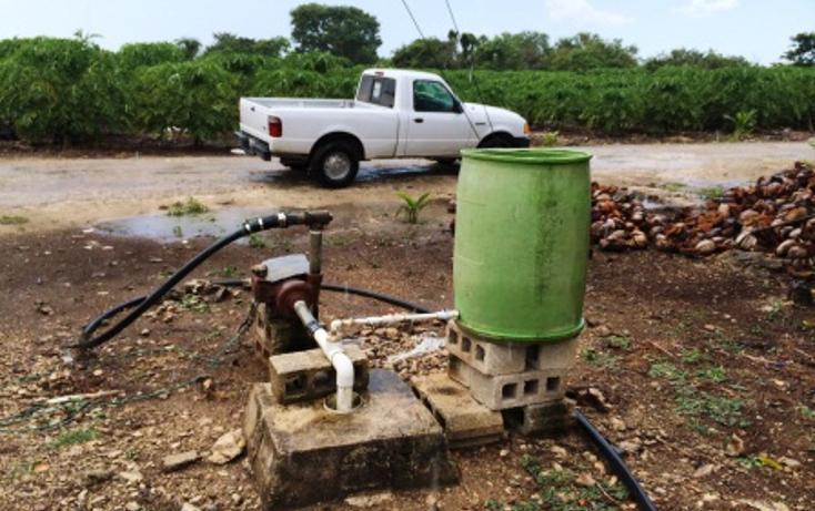 Foto de rancho en venta en  , dzilam de bravo, dzilam de bravo, yucatán, 1132185 No. 22