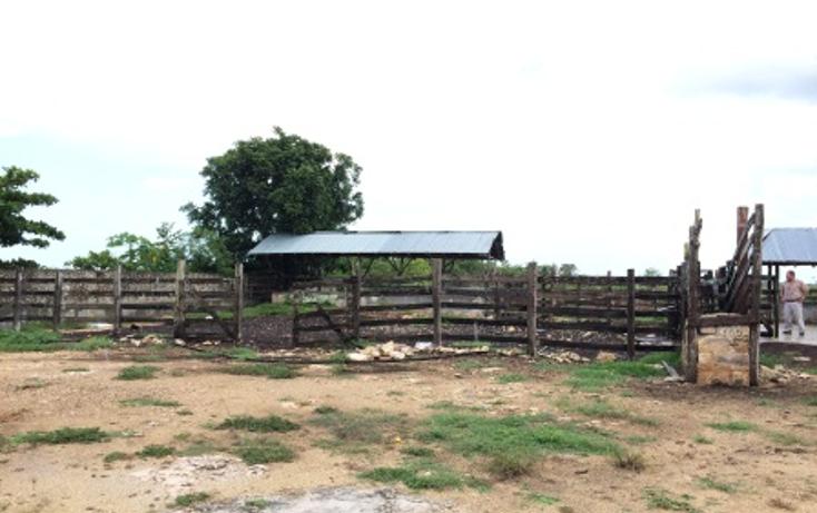 Foto de rancho en venta en  , dzilam de bravo, dzilam de bravo, yucatán, 1132185 No. 24