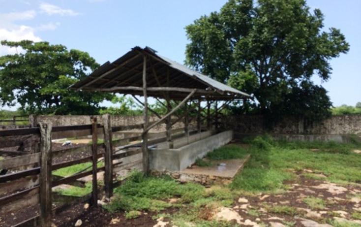 Foto de rancho en venta en  , dzilam de bravo, dzilam de bravo, yucatán, 1132185 No. 25