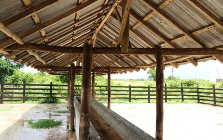 Foto de rancho en venta en  , dzilam de bravo, dzilam de bravo, yucatán, 1132185 No. 26