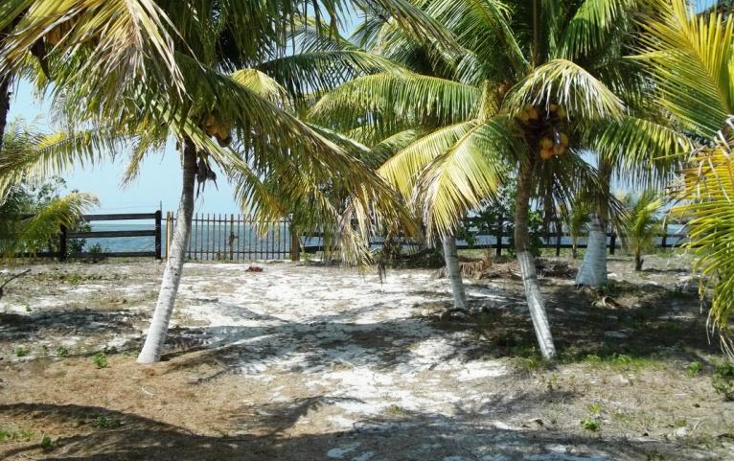 Foto de terreno habitacional en venta en  , dzilam de bravo, dzilam de bravo, yucatán, 1773640 No. 02