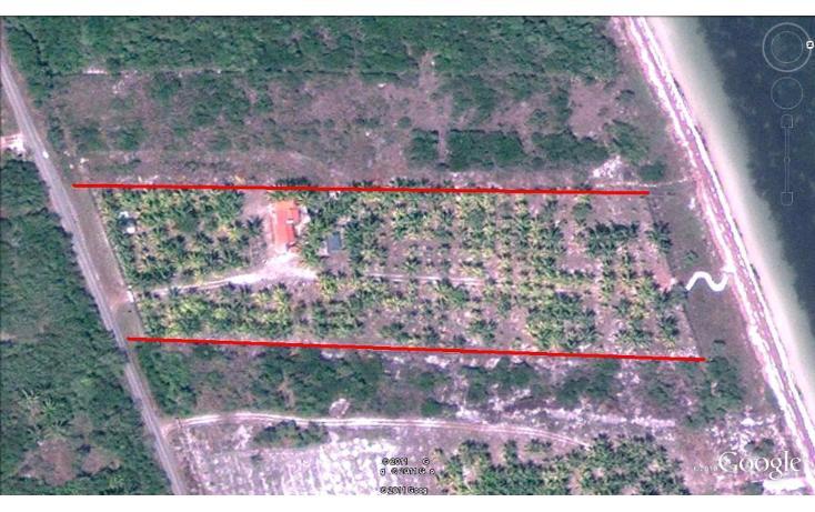 Foto de terreno habitacional en venta en  , dzilam de bravo, dzilam de bravo, yucatán, 1773640 No. 17