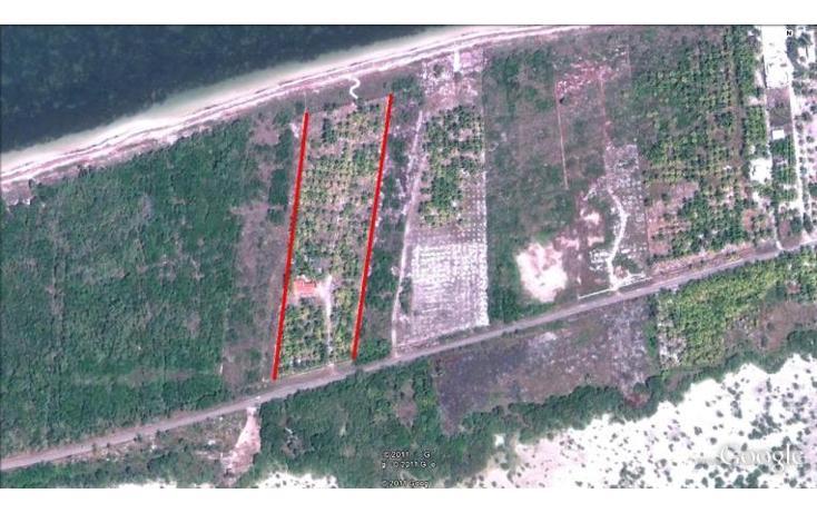 Foto de terreno habitacional en venta en  , dzilam de bravo, dzilam de bravo, yucatán, 1773640 No. 18