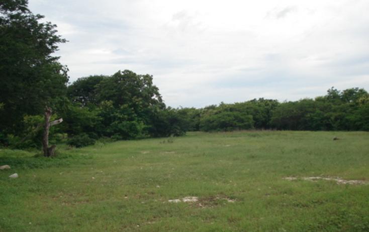 Foto de terreno habitacional en venta en  , dzitya, m?rida, yucat?n, 1088519 No. 02