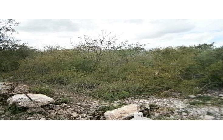 Foto de terreno comercial en venta en  , dzitya, mérida, yucatán, 1296575 No. 02