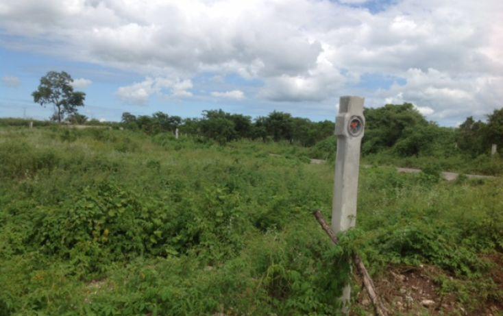 Foto de terreno habitacional en venta en, dzitya, mérida, yucatán, 1389151 no 06