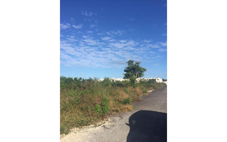 Foto de terreno habitacional en venta en  , dzitya, mérida, yucatán, 1554568 No. 05