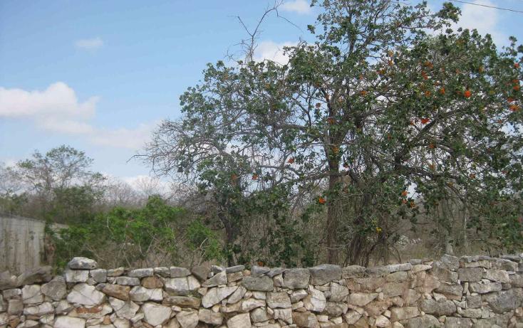 Foto de terreno habitacional en venta en  , dzitya, mérida, yucatán, 1961298 No. 01