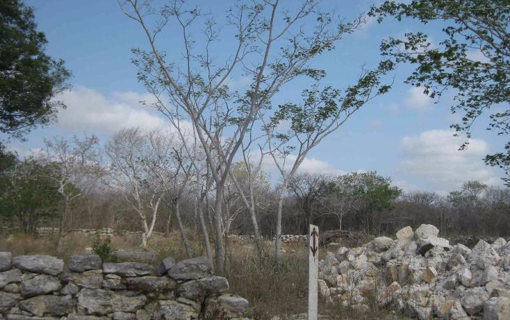Foto de terreno habitacional en venta en  , dzitya, mérida, yucatán, 1961298 No. 06