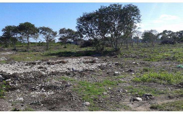 Foto de terreno habitacional en venta en  , dzitya, mérida, yucatán, 1962775 No. 04