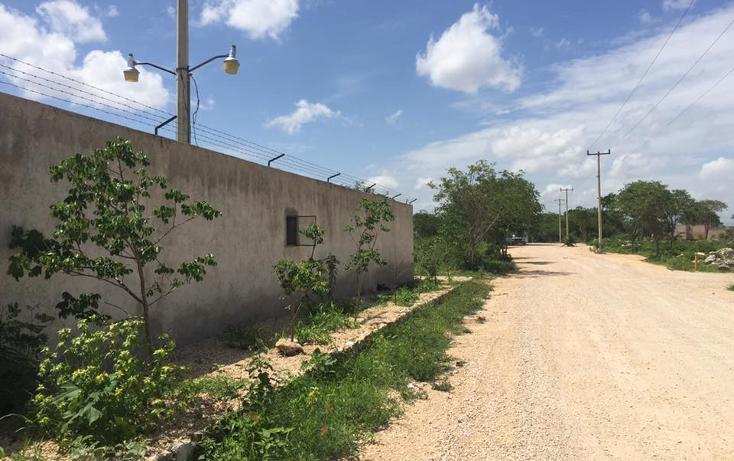 Foto de terreno habitacional en venta en  , dzitya, mérida, yucatán, 2011696 No. 06