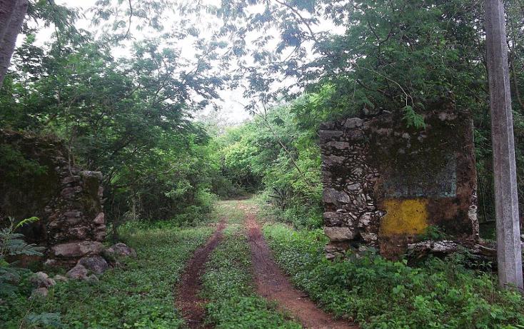 Foto de casa en venta en  , dziuche, hoctún, yucatán, 1182967 No. 04