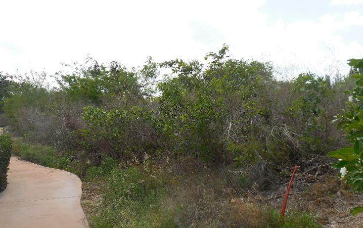 Foto de terreno habitacional en venta en, ejido de chuburna, mérida, yucatán, 1189063 no 13