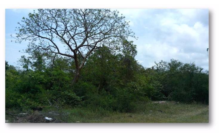 Foto de terreno habitacional en venta en  , ejido la pedrera, altamira, tamaulipas, 1088311 No. 03
