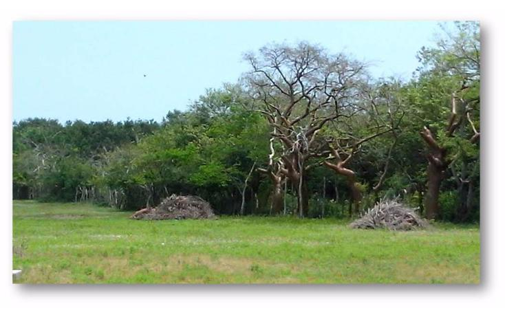 Foto de terreno habitacional en venta en  , ejido la pedrera, altamira, tamaulipas, 1088311 No. 04