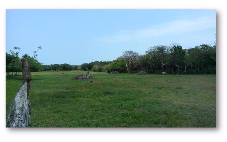 Foto de terreno habitacional en venta en  , ejido la pedrera, altamira, tamaulipas, 1088311 No. 05