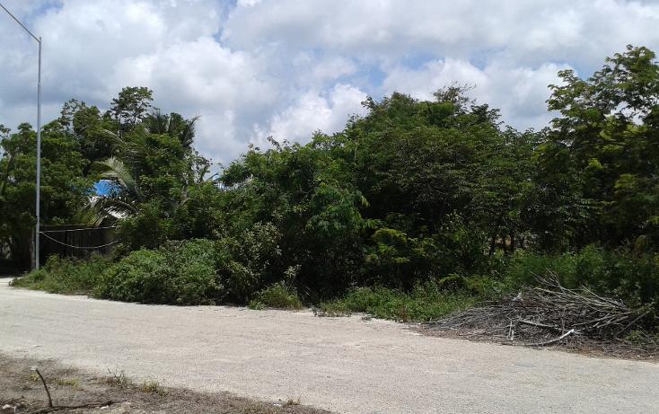 Foto de terreno habitacional en venta en  , ejido, tulum, quintana roo, 1085731 No. 01