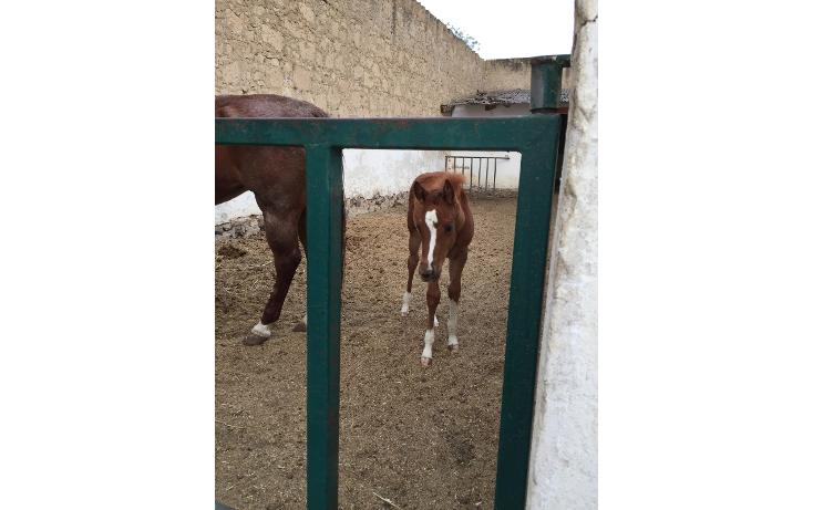 Foto de rancho en venta en  , el calvario, perote, veracruz de ignacio de la llave, 1665717 No. 42